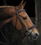 Smith Worthington bridle